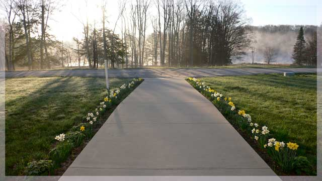 daffodil_path