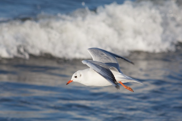 Seagull with oean